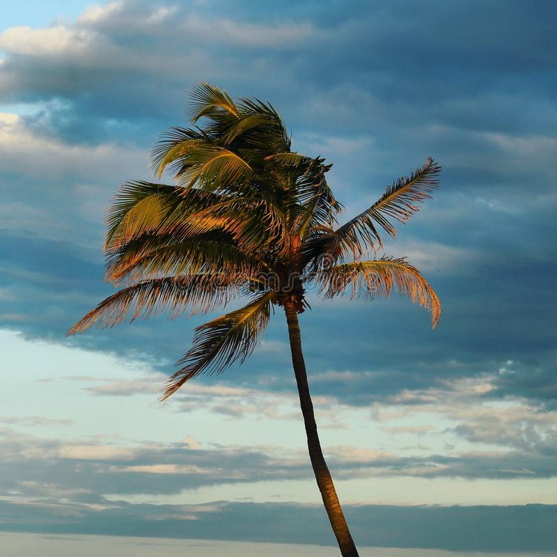 Bella palma fotografie stock