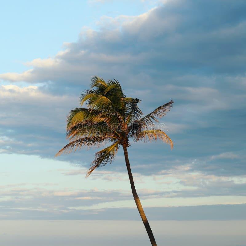 Bella palma immagine stock