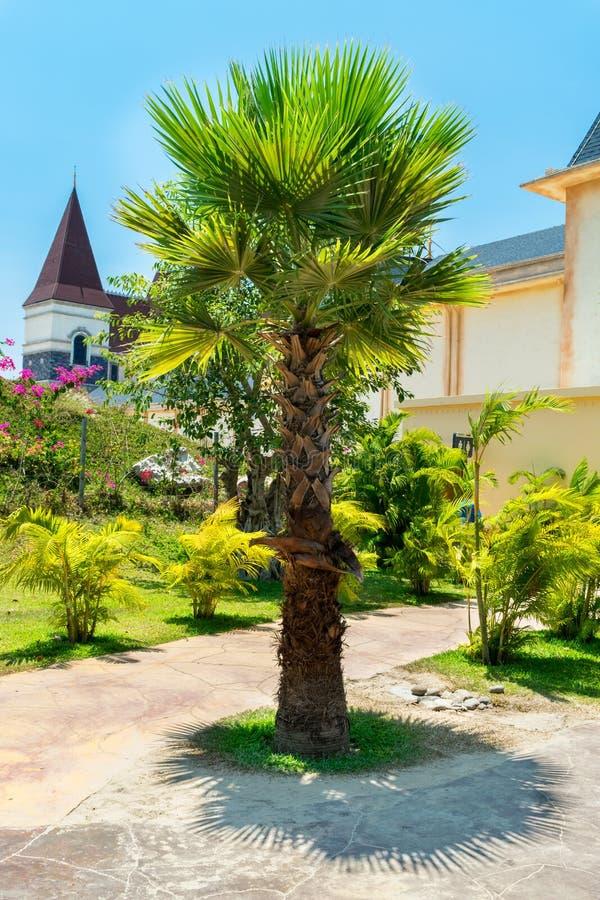 Bella palma in un parco tropicale sotto il sole fotografia stock
