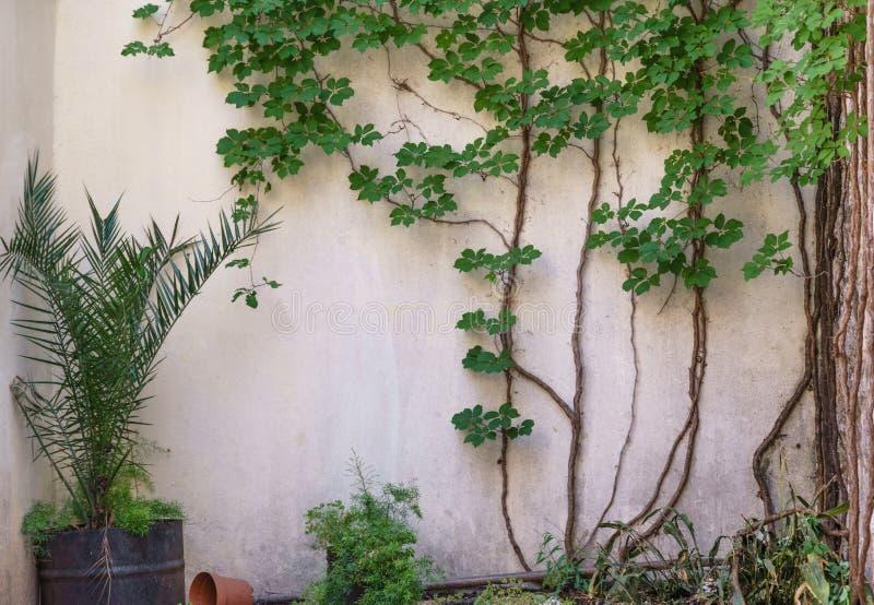 Bella parete della pietra grigia fotografia stock libera da diritti