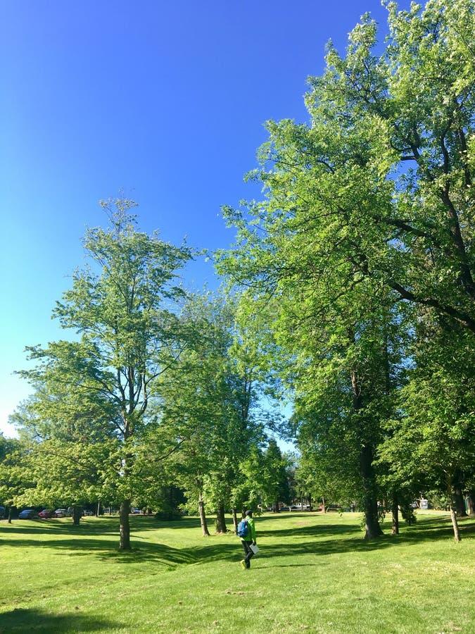 Bella pianta fertile & alberi alti immagini stock