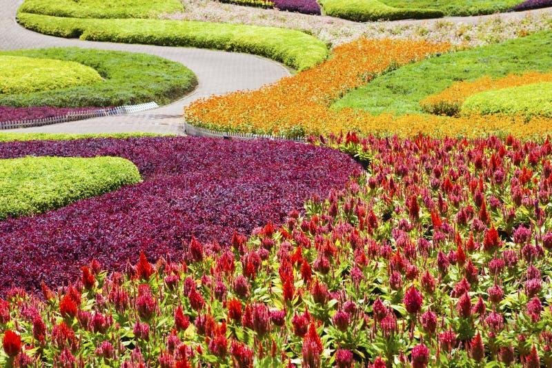 Bella piantagione del fiore decorata in giardino fotografia stock