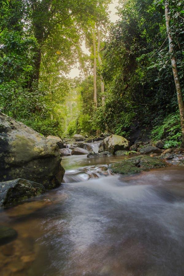 Bella piccola cascata nel selvaggio, natura immagini stock libere da diritti