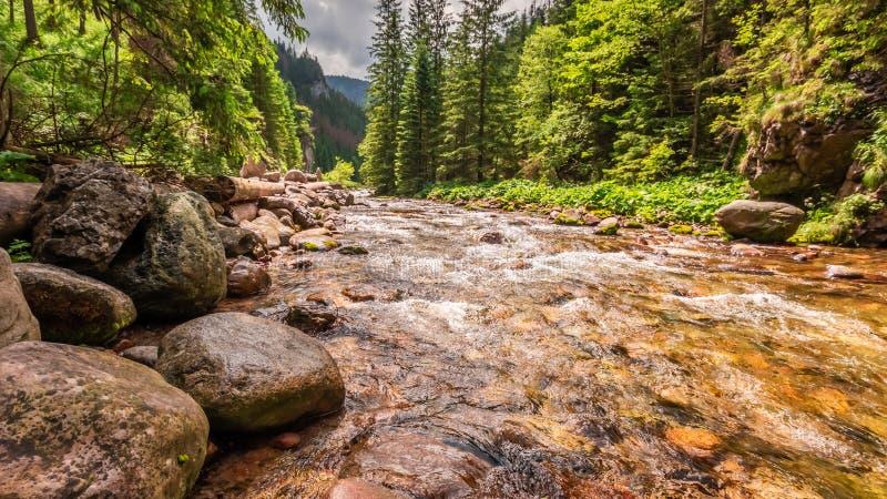 Bella piccola corrente con le rocce in valle di Koscieliska, montagne di Tatra fotografia stock