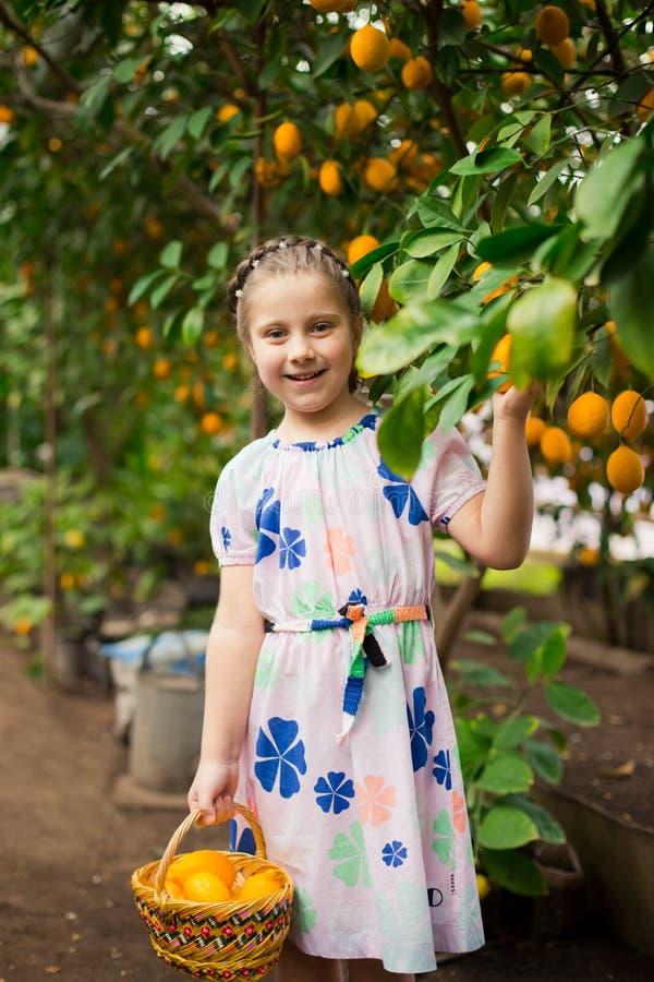 Bella piccola ragazza felice in vestito variopinto nel giardino Lemonarium del limone che seleziona i limoni maturi freschi nel s immagini stock