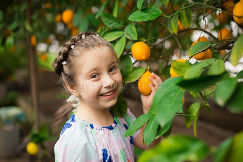 Bella piccola ragazza felice in vestito variopinto nel giardino Lemonarium del limone che seleziona i limoni maturi freschi nel s immagine stock