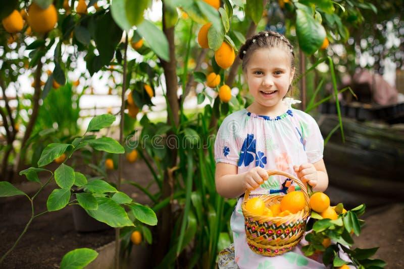 Bella piccola ragazza felice in vestito variopinto nel giardino Lemonarium del limone che seleziona i limoni maturi freschi nel s fotografia stock