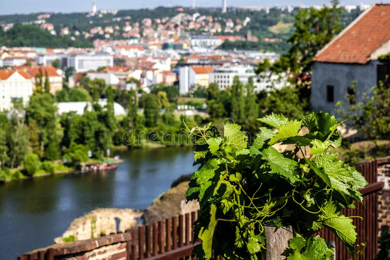 Bella Praga tramite le foglie della vigna alla vigna di Vysehrad fotografia stock