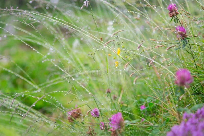 Bella priorità bassa dei fiori fotografia stock