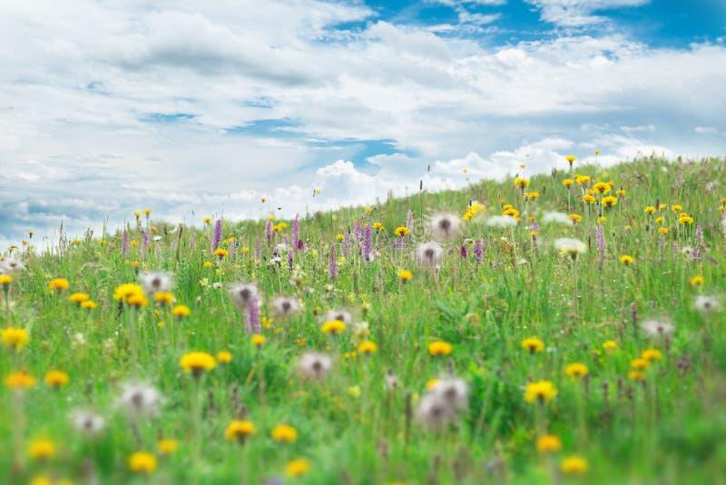 Bella priorità bassa dei fiori fotografie stock libere da diritti