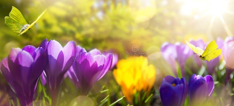 Bella priorità bassa della sorgente fiori della molla del fiore su luce solare di mattina nel parco di aprile immagine stock libera da diritti