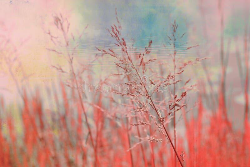 Bella, priorità bassa vaga con erba fotografia stock