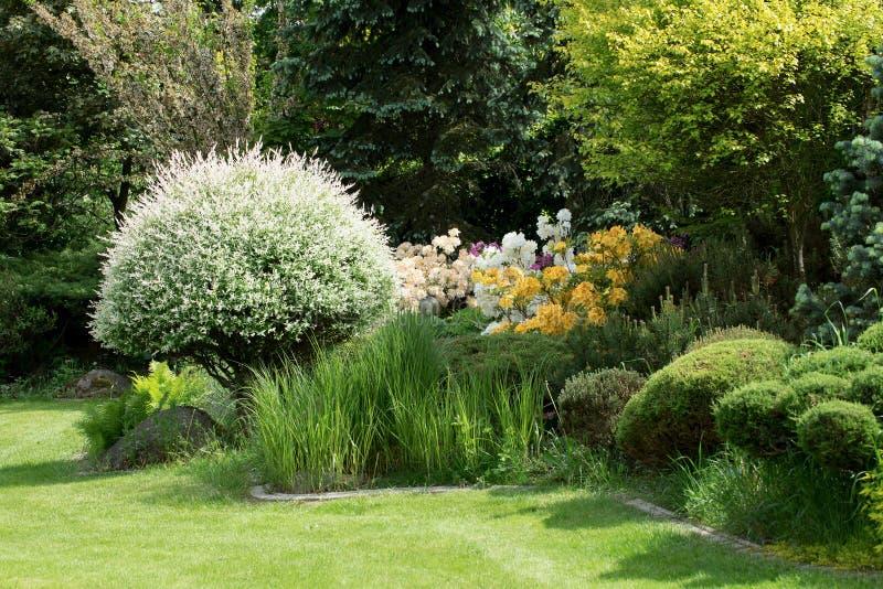 Bella progettazione del giardino della molla con rododendro fotografia stock libera da diritti