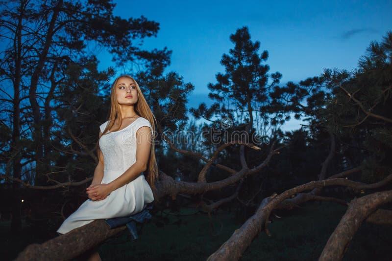 Bella ragazza bionda che si siede sul vecchio ramo di albero nella foresta leggiadramente mistica di notte immagini stock