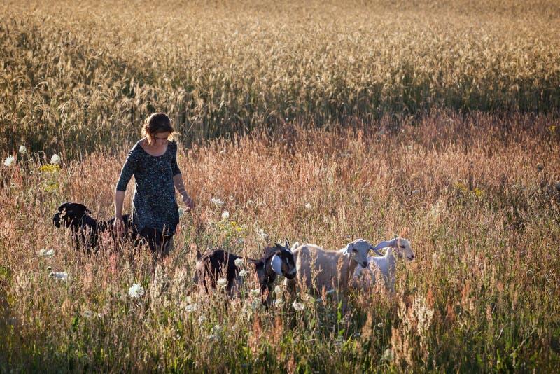 Bella ragazza con i suoi animali domestici nel giacimento della segale fotografia stock