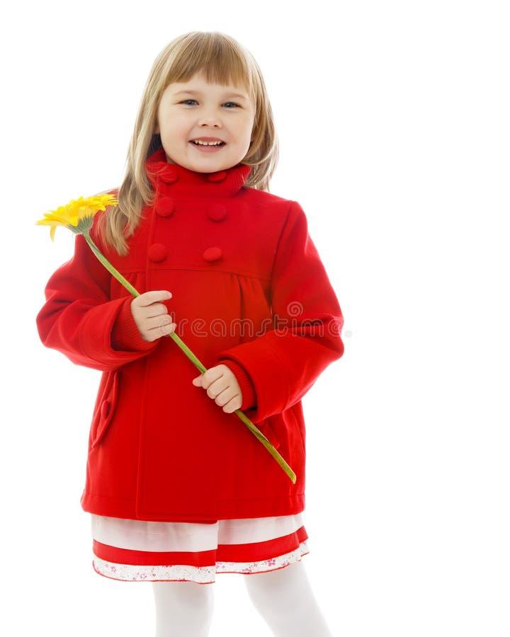 Bella ragazza con un fiore fotografia stock