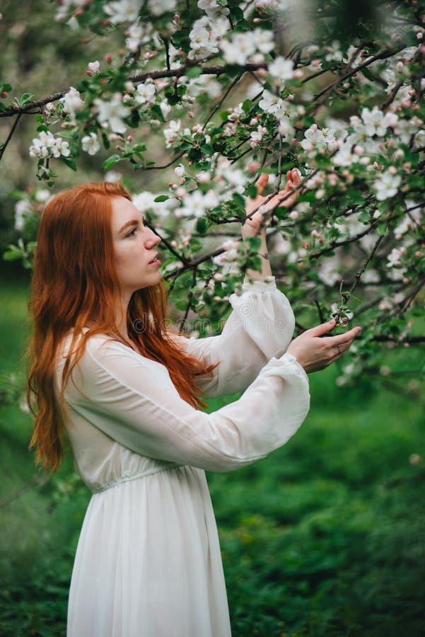 Bella ragazza dai capelli rossi in un vestito bianco fra gli Apple-alberi sboccianti nel giardino fotografie stock libere da diritti