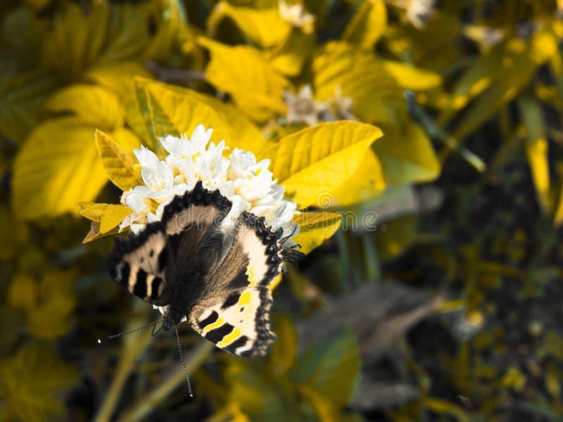 Bella retro foto con batterfly e fiori nel giardino di estate fotografia stock