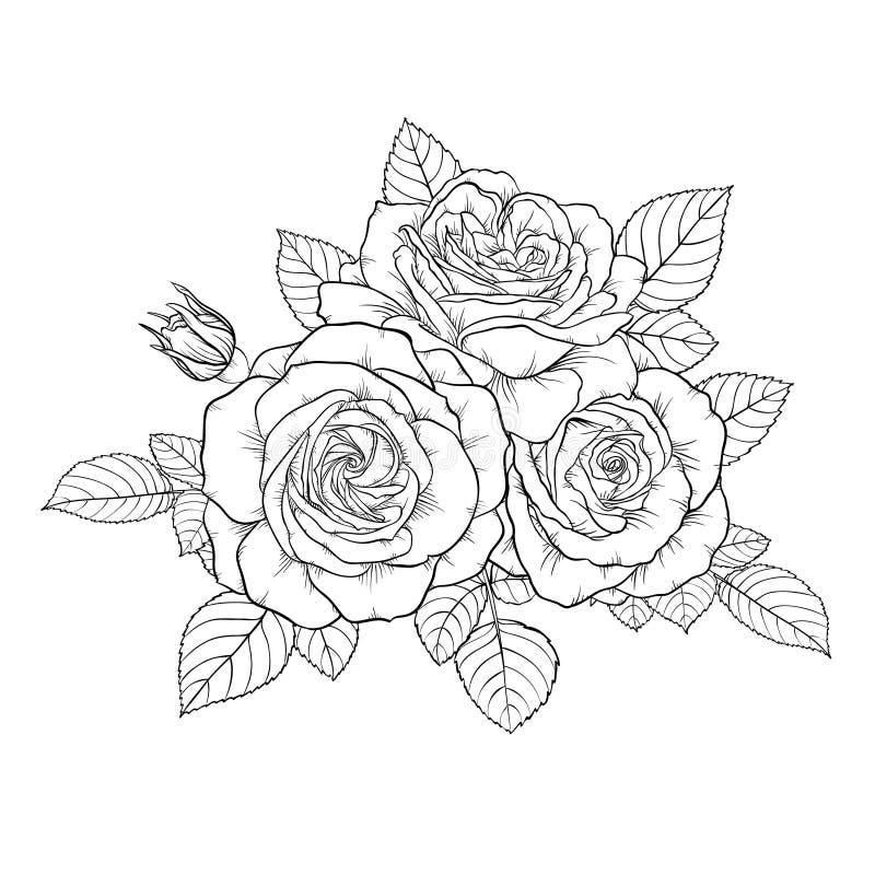 Bella rosa in bianco e nero monocromatica del mazzo isolata su fondo illustrazione vettoriale