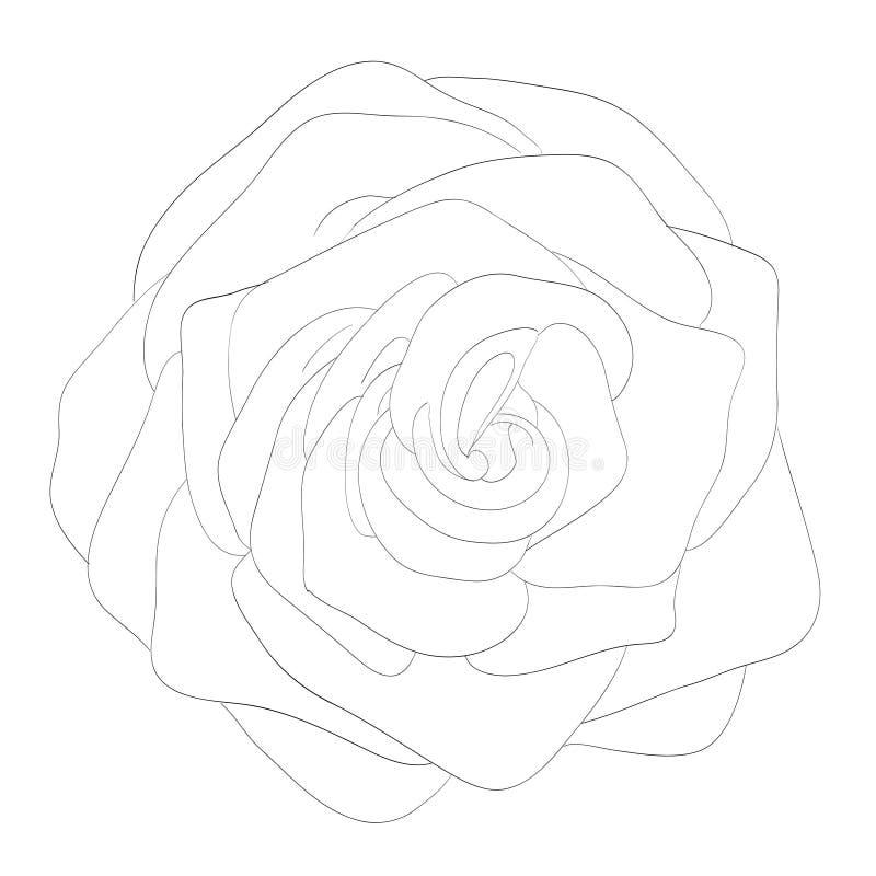 Bella rosa in bianco e nero monocromatica isolata su fondo bianco ‹Di royalty illustrazione gratis