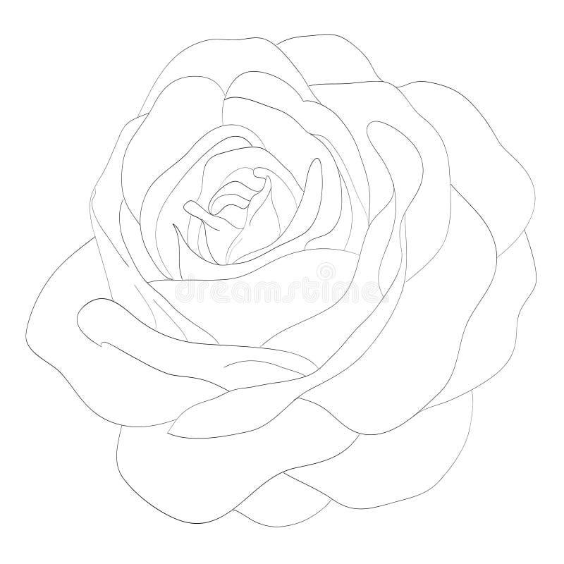 Bella rosa in bianco e nero monocromatica isolata su fondo bianco ‹Di illustrazione di stock
