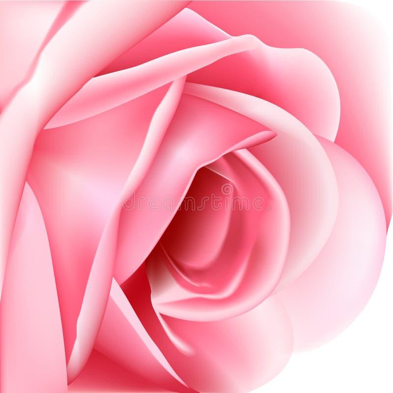 Bella Rosa dentellare royalty illustrazione gratis