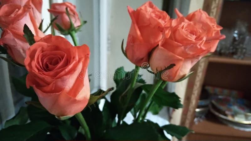 Bella rosa per mia nonna fotografie stock