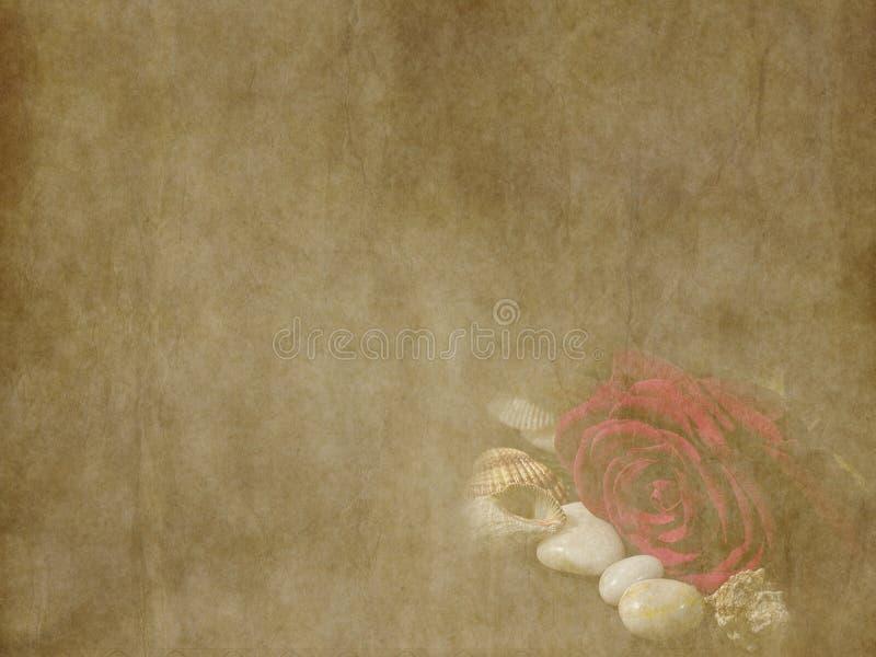 Bella rosa rossa d'annata con la carta di festa delle conchiglie su vecchio fondo di carta immagine stock