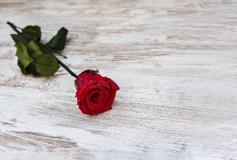 Bella rosa rossa su fondo rustico fotografia stock libera da diritti