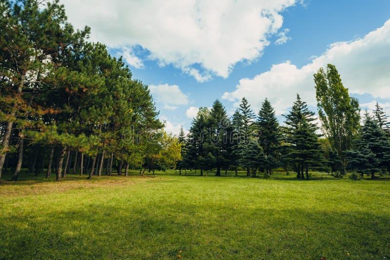 Bella scena del parco in parco pubblico con il campo di erba verde, la pianta verde dell'albero e un cielo blu nuvoloso immagini stock libere da diritti