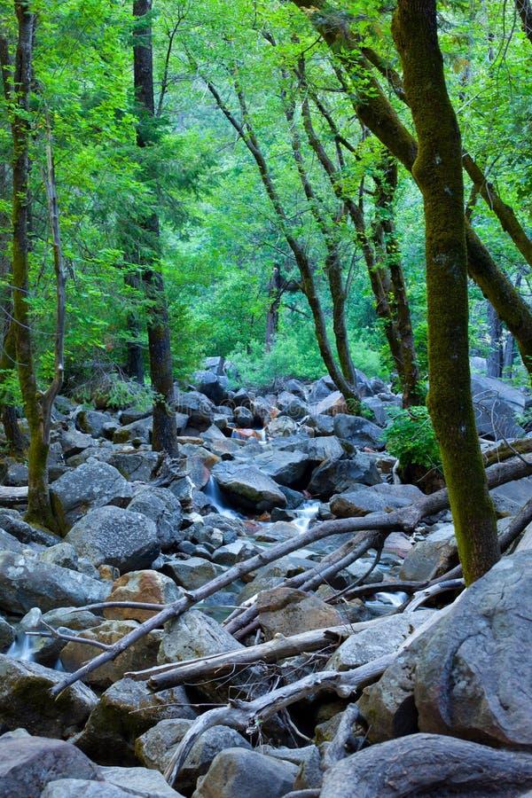 Bella scena della foresta con insenatura, le rocce e il wate fotografie stock