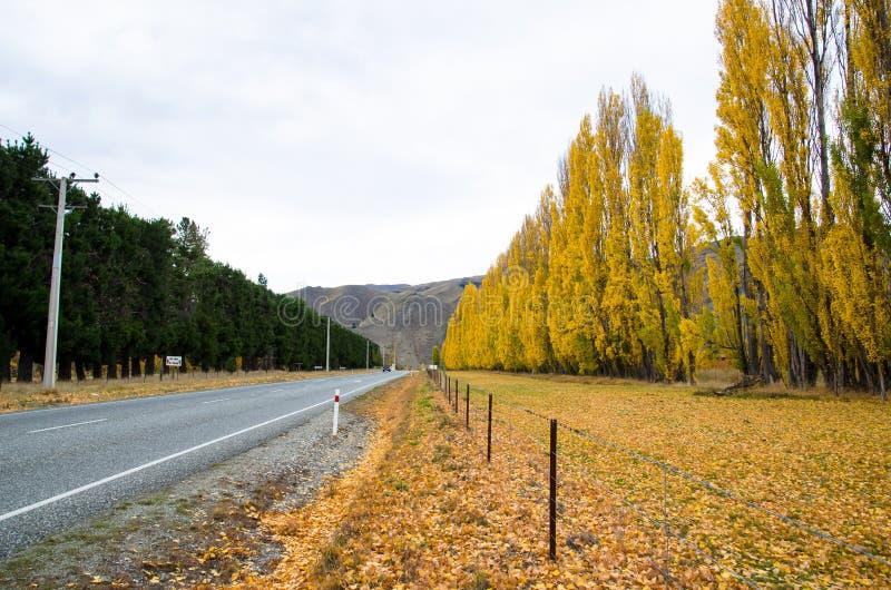 Bella scena di autunno lungo la strada in Nuova Zelanda fotografia stock libera da diritti