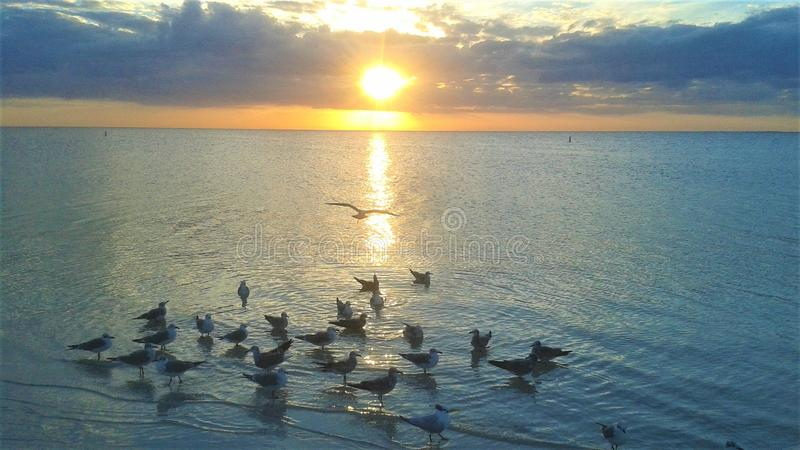 Bella scena di insieme del sole della riva della spiaggia con riunirsi dei gabbiani immagine stock