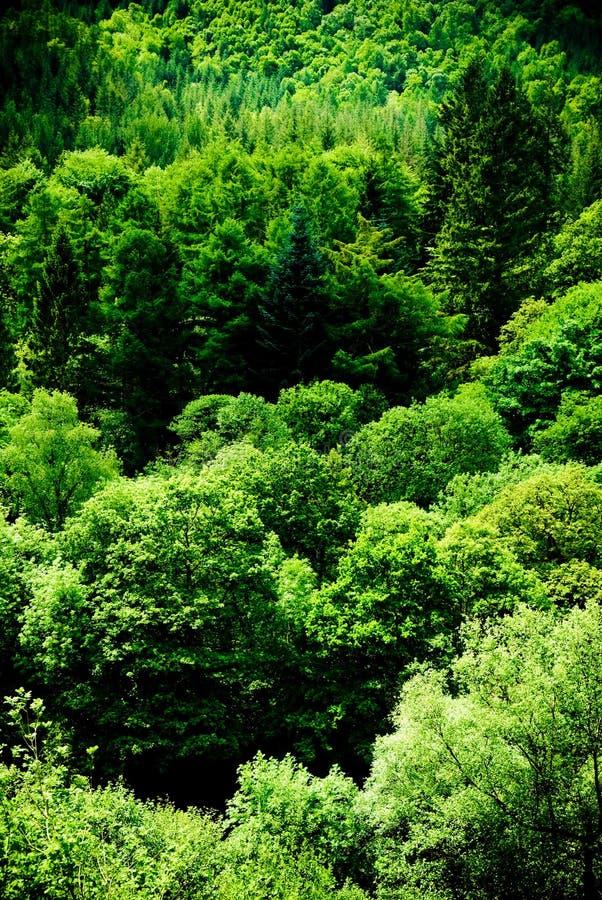 Bella scena verde della foresta fotografia stock libera da diritti