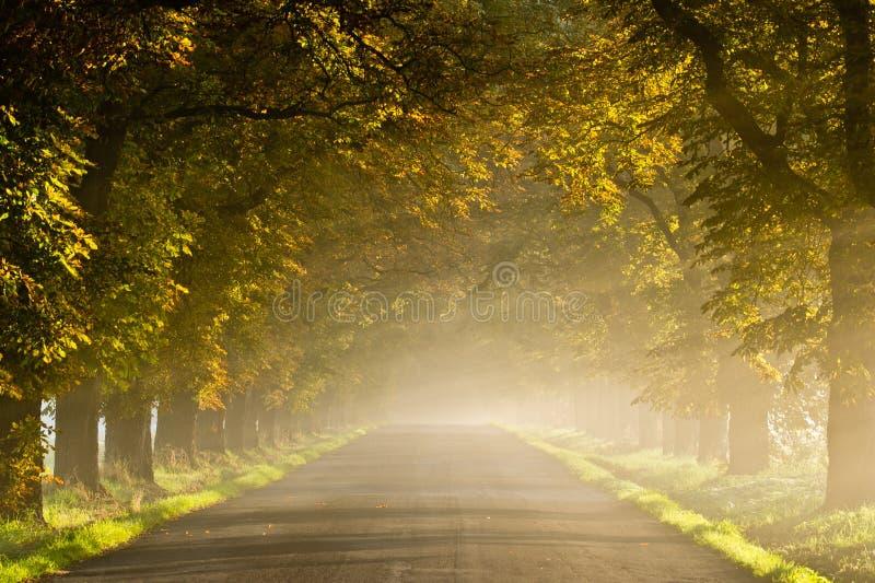 Bella scena viva di autunno con la strada nebbiosa fotografia stock