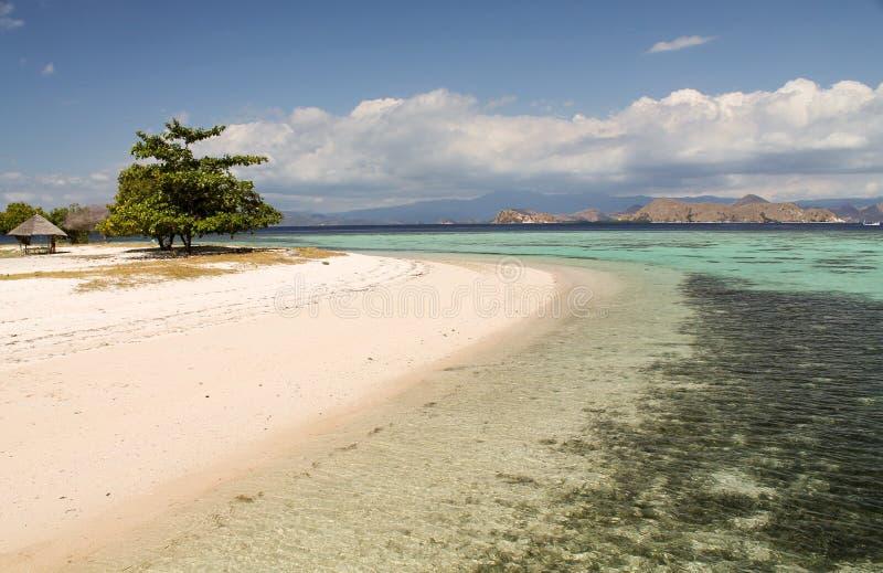 Bella scogliera vicino all'isola di Kanawa, Indonesia fotografia stock libera da diritti