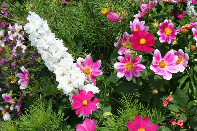 Bella sorgente nel giardino immagini stock libere da diritti
