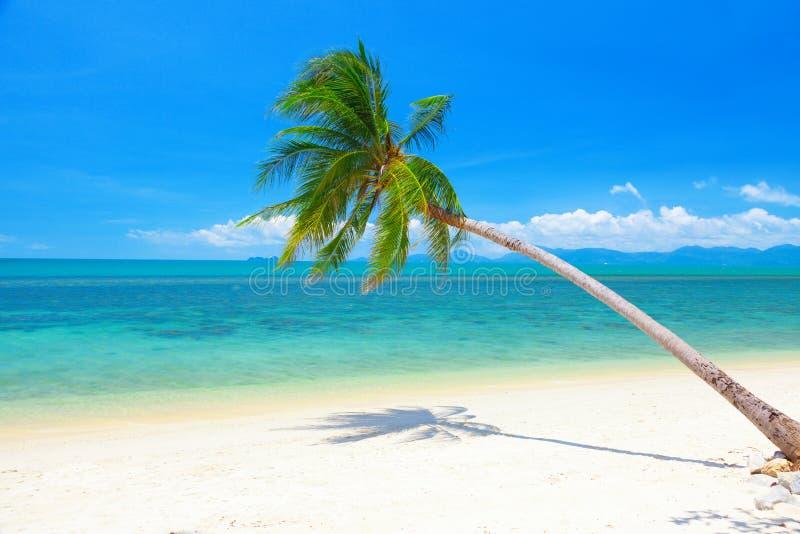 Bella spiaggia con la palma ed il mare di noce di cocco fotografie stock libere da diritti