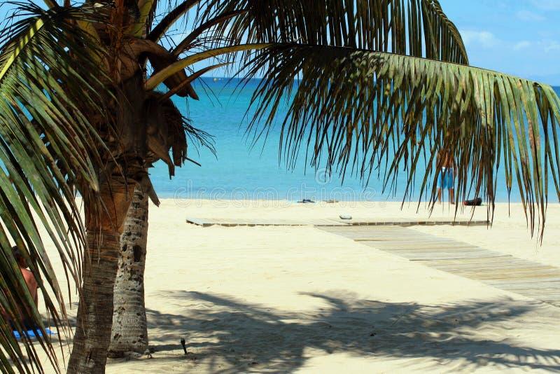 Bella spiaggia con le palme immagini stock libere da diritti