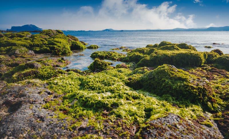 Bella spiaggia con le pietre in alga su Udo Island o, un viaggio in Corea del Sud, un bello paesaggio fotografia stock