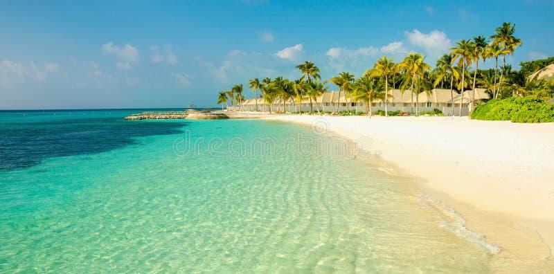 Bella spiaggia esotica sabbiosa con gli alti cocchi fotografia stock