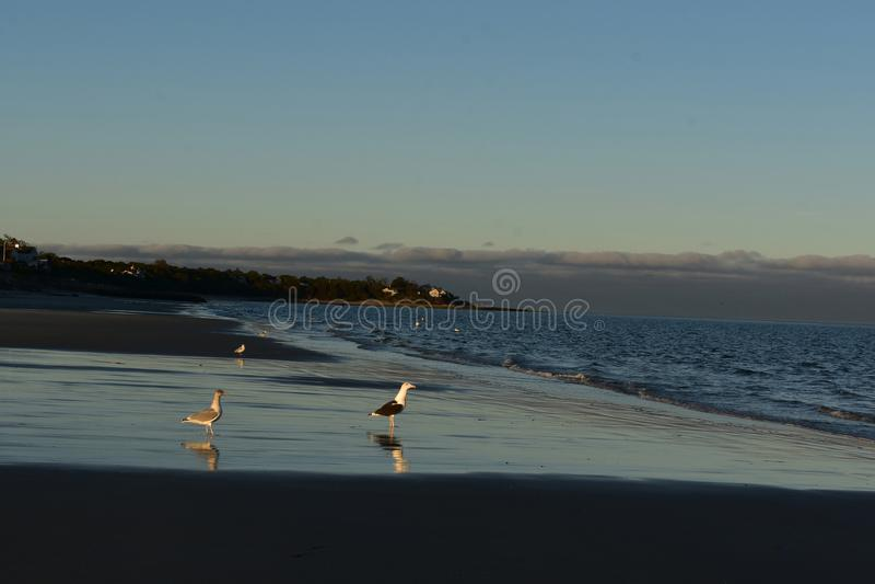 Bella spiaggia sulla costa del Capo Cod durante il tramonto immagini stock