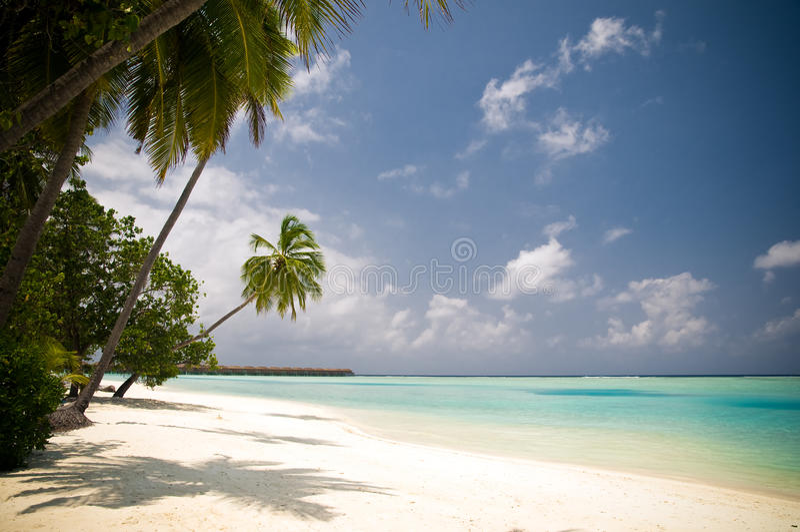 Bella spiaggia tropicale con le palme fotografia stock