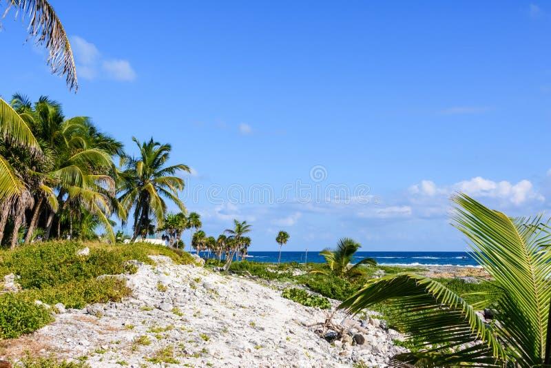 Bella spiaggia tropicale con le palme ed il grande cielo blu immagini stock