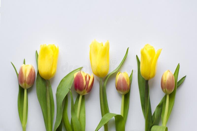 Bella stagione del fiore in primavera fotografia stock libera da diritti