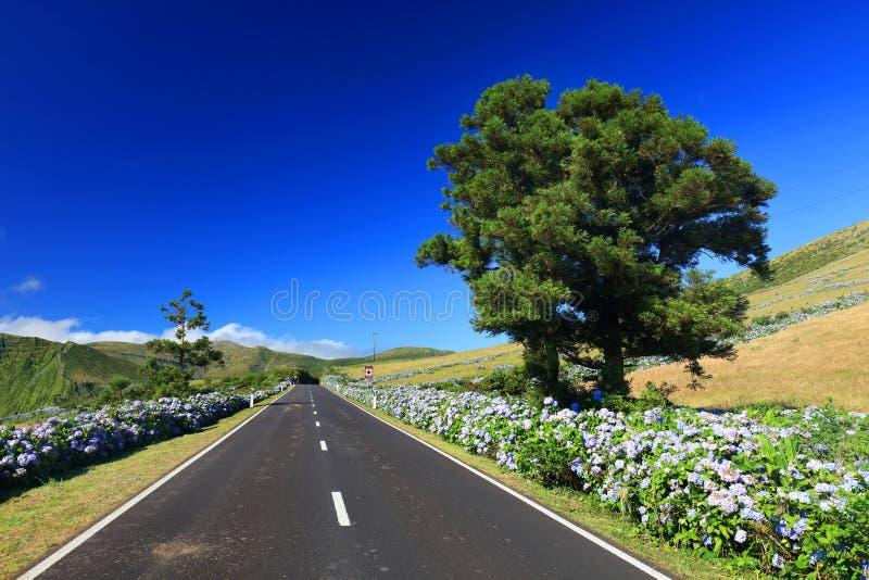 Bella strada alpina sull'isola del Flores in un giorno soleggiato fotografia stock