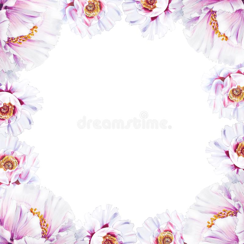Bella struttura bianca del confine della peonia Mazzo dei fiori Stampa floreale Disegno dell'indicatore illustrazione di stock