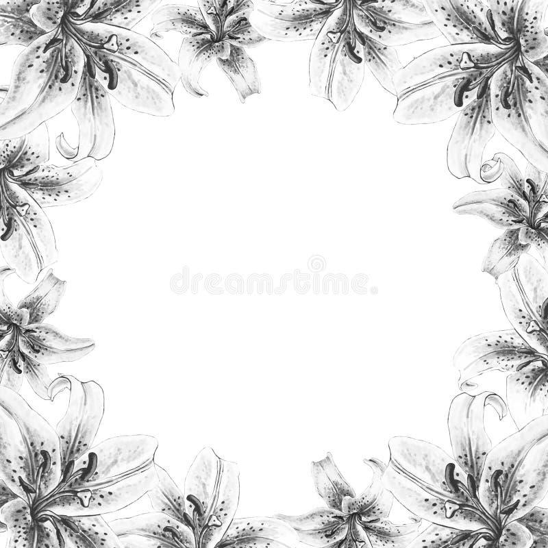 Bella struttura in bianco e nero del confine del giglio Mazzo dei fiori Stampa floreale Disegno dell'indicatore immagini stock libere da diritti