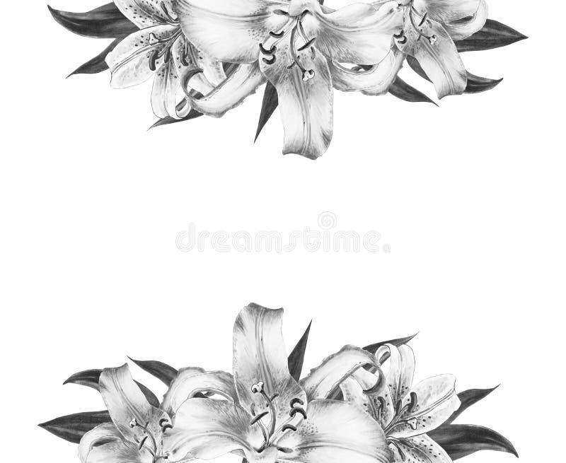 Bella struttura in bianco e nero del confine del giglio Mazzo dei fiori Stampa floreale Disegno dell'indicatore immagini stock