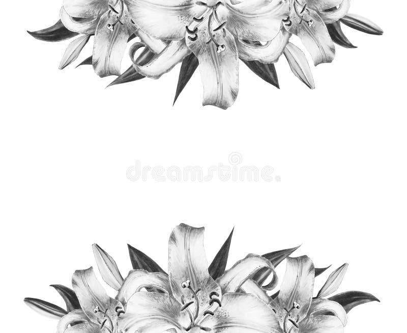 Bella struttura in bianco e nero del confine del giglio Mazzo dei fiori Stampa floreale Disegno dell'indicatore fotografia stock libera da diritti